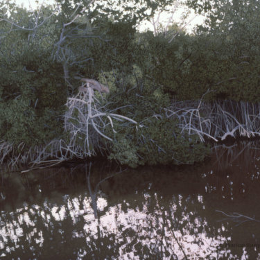MR-335 Sanibel Island, Florida, Wildlife Refuge–Water, Trees, Light