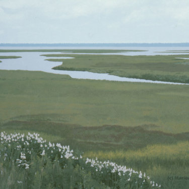 MR-318 Rye Marshlands Conservancy with Flowers (Sold)